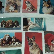 Postales: BELLO LOTE DE 35 ANTIGUAS POSTALES TEMÁTICA ANIMALES PERROS AÑOS 50 CASI TODAS SIN CIRCULAR. Lote 275971818