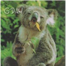 Postales: TARJETA POSTAL AUSTRALIA KOALA. Lote 276817813