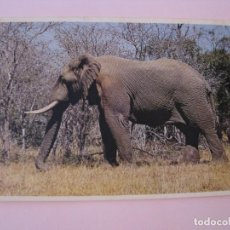 Postales: POSTAL DE SUDAFRICA. ELEFANTE. CIRCULADA 1981.. Lote 279473018