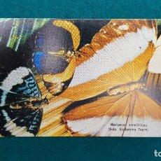 Postales: POSTAL MARIPOSAS AMAZONICAS - ED. FICA - IQUITOS (PERU). Lote 288602873