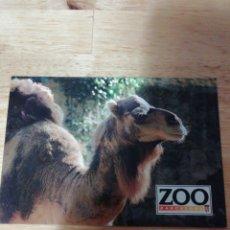 Postales: POSTAL ZOO BARCELONA - CAMELLO - ESCUDO DE ORO. Lote 289232128