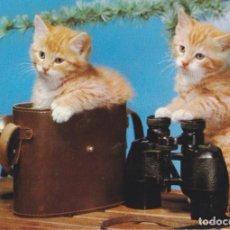 Postales: ANIMALES, GATOS – COLECCION PERLA 176/1 – ESCRITA. Lote 289302133