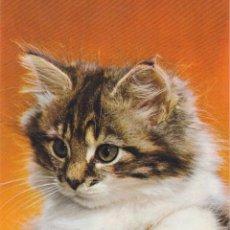 Postales: ANIMALES, GATOS – EDITA CYZ 7960-B – ESCRITA. Lote 289302263