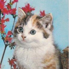 Postales: ANIMALES, GATOS – EDITA CYZ 6974 – ESCRITA. Lote 289303108