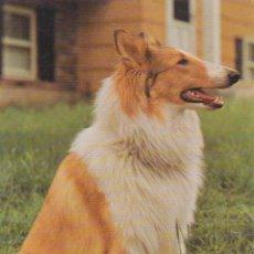 Postales: ANIMALES, PERROS – EDITA CYZ 7984B – S/C. Lote 289303653