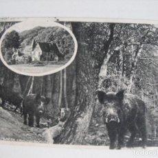 Postales: ALEMANIA. BOSQUE CON JABALIES. 1913. Lote 292027438