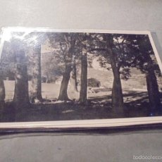 Postales: TORLA - ( ORDESA ) ALTO PIRINEO DE ARAGÓN BOSQUECILLO DE LA FINCA DE VIU - ZERKOWTZ - 14X9 CM. . Lote 57216493