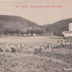 Postales: JACA (HUESCA) - RECOLECCION DE FLOR INSECTICIDA. Lote 96806191