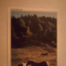 Postkarten - postal pirineos (huesca) - 77096681