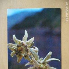 Postales: FLOR DE NIEVE (EDELWEIS). Lote 148212474
