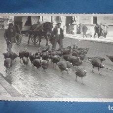 Postales: POSTA HERALDO DE ARAGÓN REPRODUCIÓN- VENDEDORES PAVOS NAVIDAD COSO ZARAGOZA; SIGLO XX. Lote 194779251