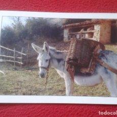 Cartes Postales: POST CARD ARAGÓN ABELLA 1987 PIRINEOS PIRINEO HUESCA EDICIONES JOAQUÍN IMPRENTA AGUARON BURRO DONKEY. Lote 198725217