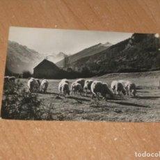 Cartes Postales: POSTAL DE BIELSA. Lote 199585125