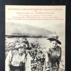 Postales: JACA , HUESCA , PLANTACIONES A. CAUBET , FLOR DE PYRETHRE , FRANCESA , RARA.. Lote 212376573