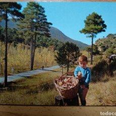 Postales: LOS CEREZOS. TERUEL. PAISAJE PINO TRES GARRAS.. Lote 295475733