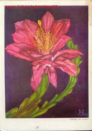 FLOR DE CACTO N612 ORIGINAL (Postales - Postales Temáticas - Arte)