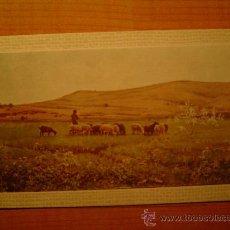 Postales: POSTAL MUSEO DE ARTE MODERNO (BARCELONA) JOAQUIN VAYREDA LO REMAT SIN CIRCULAR . Lote 21422231