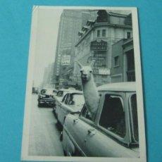 Postales: POSTAL NEW YORK CITY, 1957. PHOTOGRAPH BY INGE MORATH/MAGNUM FOTOS. FOTOFOLIO. Lote 37757992