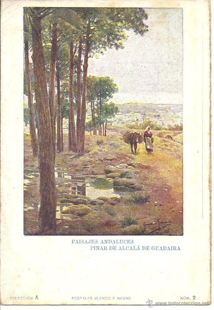 PS1384 PAISAJES ANDALUCES 'PINAR DE ALCALÁ DE GUADAIRA'. POSTALES BLANCO Y NEGRO. SIN CIRCULAR (Postales - Postales Temáticas - Arte)