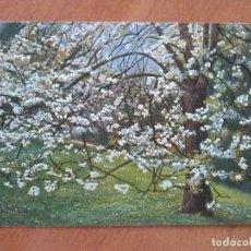 Postales: P. HOMMEL : FLORES. Lote 119268535