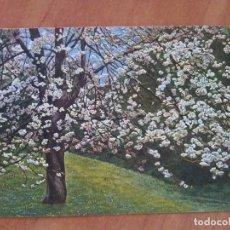 Postales: P. HOMMEL . FLORES. Lote 119268675