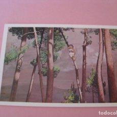 Postales: O NENO DAS PIÑAS. CASTELAO. MUSEO DE PONTEVEDRA. ED. VELOGRAF. 1986.. Lote 156729638