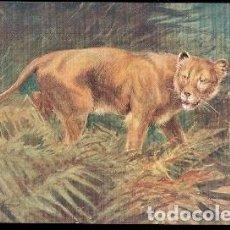 Postales: GRAN BRETANA & POSTALE, ANIMALES SALVAJES, LEONA, RAPHAEL TUCK & SONS OILETTE (8785). Lote 183620225