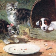 Postales: POSTAL DEL CUADRO TWO KITTENS, A PLATE AND A DOG, DE BERNARD COBBE TEMA: GATOS, PERROS, RAPHAEL TUCK. Lote 237105075