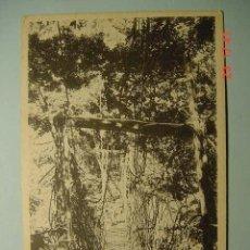 Postales: 3571 JAPON JAPAN - MIRA MAS POSTALES DE ESTE PAIS EN MI TIENDA COSAS&CURIOSAS. Lote 6308874