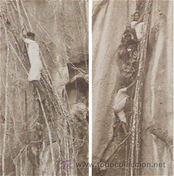 Postales: POSTAL ANTIGUA BUSCADORES DE NIDOS DE GOLONDRINA - Foto 2 - 14369997