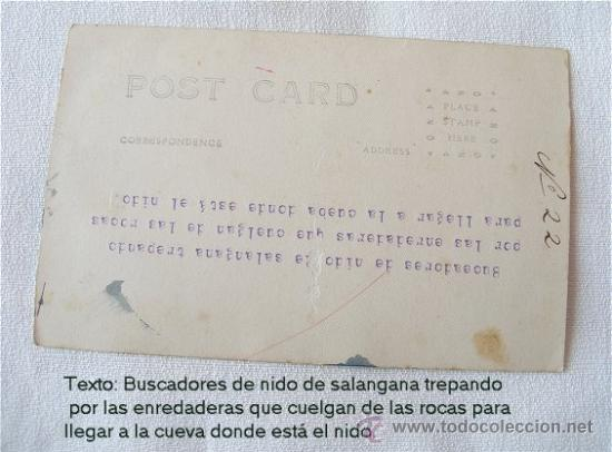 Postales: POSTAL ANTIGUA BUSCADORES DE NIDOS DE GOLONDRINA - Foto 3 - 14369997