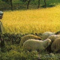 Postales: BETHLEHEM BELÉN SHEPHERD'S FIELD NUEVA. Lote 24901184
