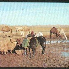 Postales: ISRAEL PASTORES EN EL DESIERTO DE JUDEA NUEVA. Lote 24911529