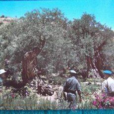 Postales: ISRAEL-V10-NO ESCRITA-ISRAEL-JERUSALEM-JARDIN DE GETHSEMANE. Lote 36040493