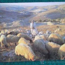 Postales: ISRAEL-V10-NO ESCRITA-ISRAEL-BETHLEHEM. Lote 36040502