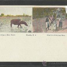 Postales: MANILA - PLOWING A RICE FIELD, NEGRITOS GRINDING RICE - MANILA PI - (17347). Lote 39157647