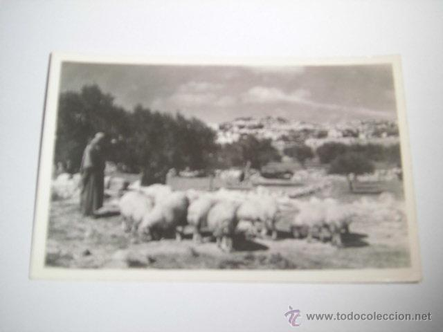 SHEPHERD`SFIELD.-PHOTO LEON JERUSALEM (Postales - Postales Extranjero - Asia)