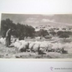 Postales: SHEPHERD`SFIELD.-PHOTO LEON JERUSALEM. Lote 43909746