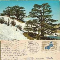 Postales: LÍBANO. LIBAN. LES CEDRES. CIRCULADA.1966. Lote 57492272