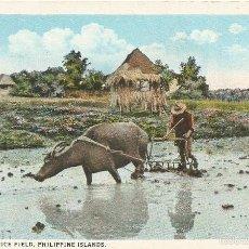 Postales: ANTIGUA POSTAL FILIPINAS DESGARRADORA CAMPO DE ARROZ HARROWING RICE FIELD MANILA P I. Lote 58230062
