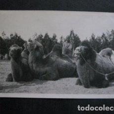 Postales: POSTAL ANTIGUA FOTOGRAFICA - CHINA -VER FOTOS-(4.143). Lote 87177780