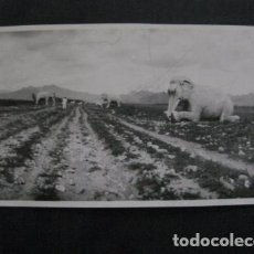 Postales: CHINA - FOTO ANTIGUA -NO POSTAL - REVERSO BLANCO - TAMAÑO POSTAL -VER FOTOS-(4.154). Lote 87178372