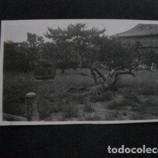Postales: CHINA - FOTO ANTIGUA -NO POSTAL - REVERSO BLANCO - TAMAÑO POSTAL -VER FOTOS-(4.161). Lote 87178728