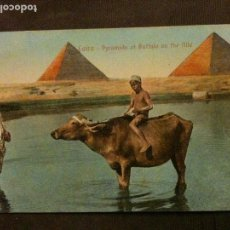 Postales: CAIRO-PYRAMIDS AT BUFFALO EN THE NILE-1942. Lote 95556647