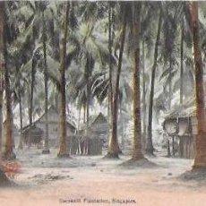 Postales: P- 8624. POSTAL SINGAPORE, COCONUT PLANTATION. . Lote 135215690