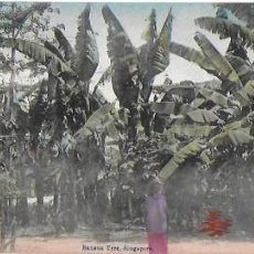 Postales: P- 8937. POSTAL BANANA TREE, SINGAPUR. . Lote 136478142