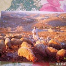 Postales: POSTAL CAMPO DE LOS PASTORES DE BELEN. Lote 151712462