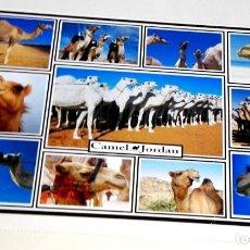 Postales: POSTAL - JORDANIA, PETRA, CAMELLOS. Lote 174555589