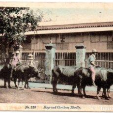 Postales: PS8265 MANILA \'CHICOS Y CARABAOS\'. PHIL. CURIO AGENCY. SIN CIRCULAR. PRINC. S. XX. Lote 179514583