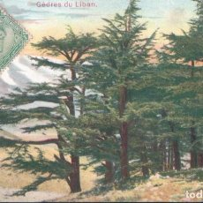 Postales: POSTAL LIBANO - CEDRES DU LIBAN. Lote 183768633